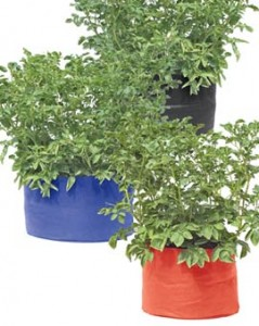 Grow bags with potato plants